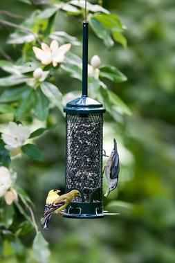 Squirrel Buster Mini Squirrel-proof Bird Feeder w/4 Metal Pe