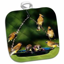 3dRose Cedar Waxwings on Grape Jelly Birdfeeder Marion Il Po