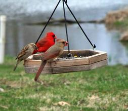 hanging platform tray bird feeder hand made