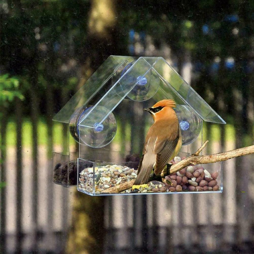 1 x plastic clear house window bird