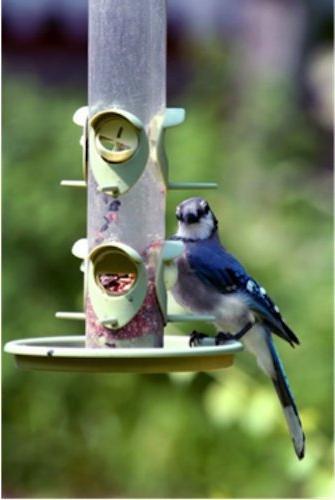 Wagner's Four Wild Bird Food, Bag