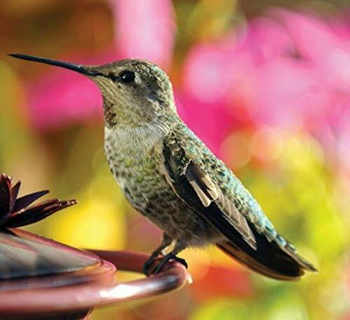 Audubon Park Food Nectar 3-Ounce