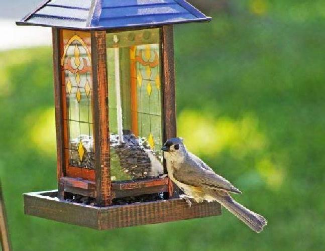 25 Wagners Four Season Thin-Shelled Sunflower Birds