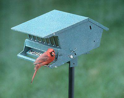 Audubon Squirrel Feeder, Lbs Seed