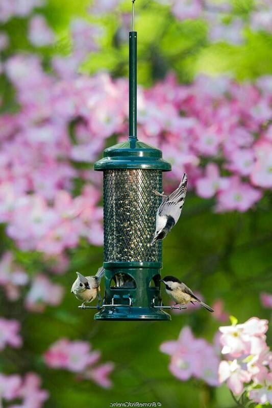 Bird Feeder Squirrel Buster Standard 1.3-pound Capacity