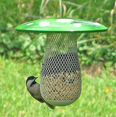 The Best Bird Feeder to Attract More Wild Birds! Keep Squirr