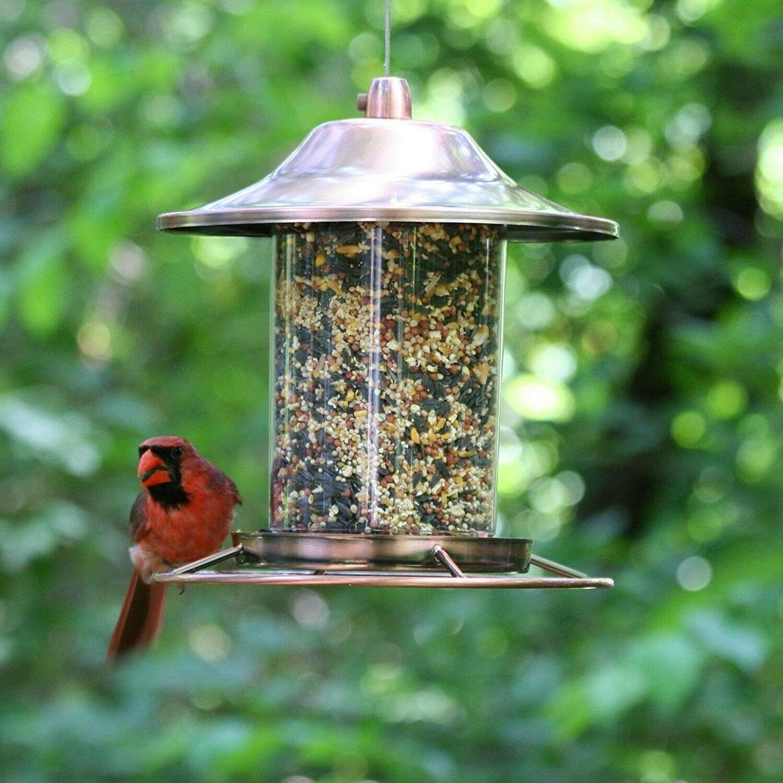 bird feeder squirrel proof wild hanging decorative