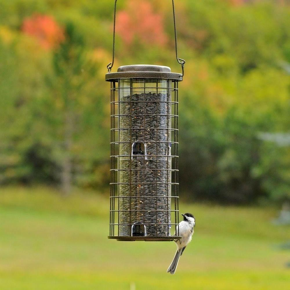 Bird Wild Holds of Seed Durable Metal, 8