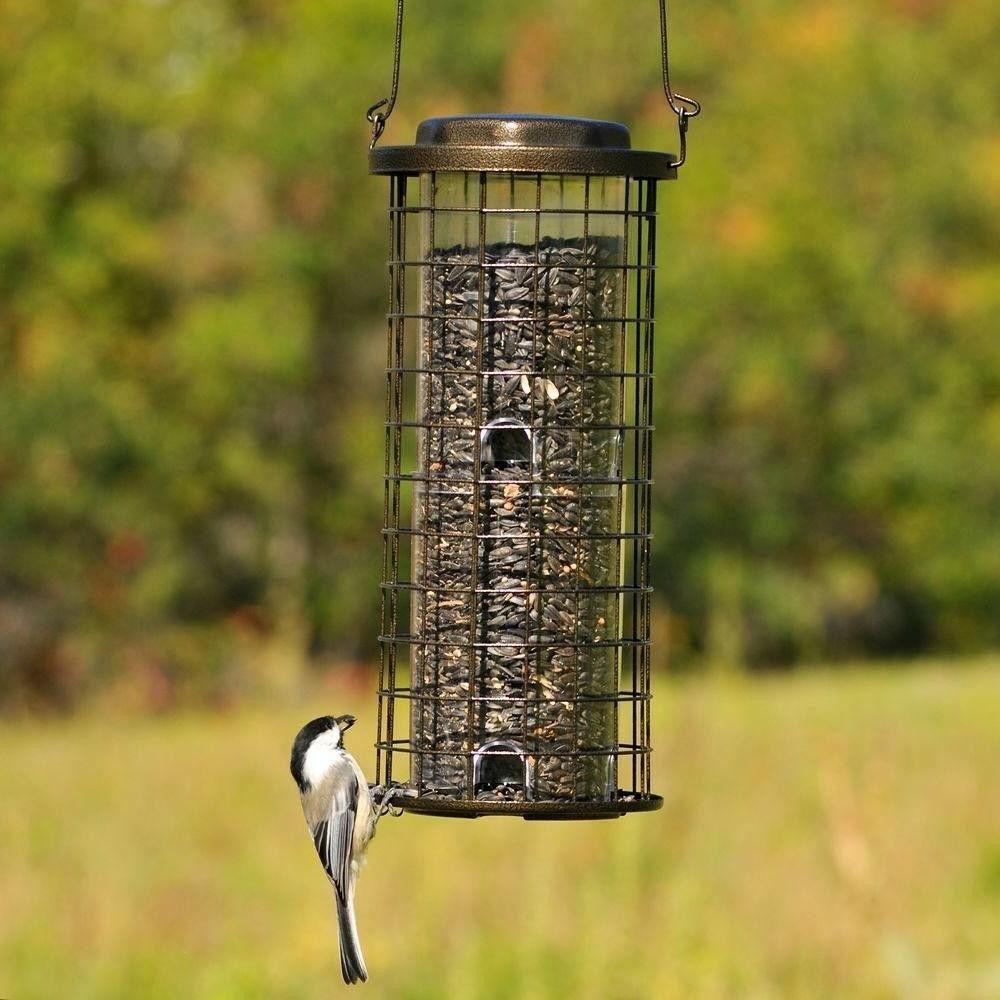 Bird Squirrel Wild Holds 3 of Seed 8