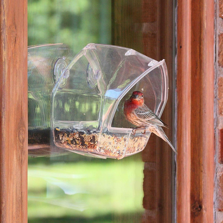 Birdscapes Proof Bird Seed Bird