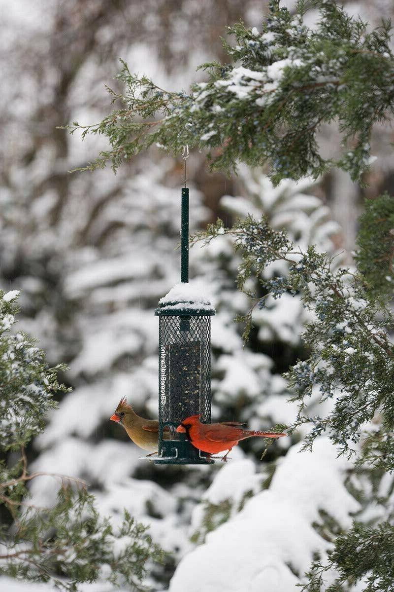 Squirrel Mini Bird Metal Perches, Se
