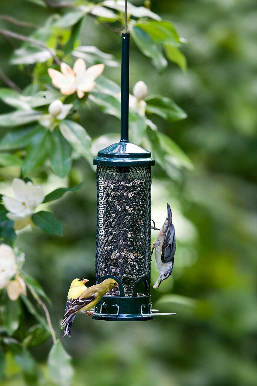 buster mini proof bird feeder w 4