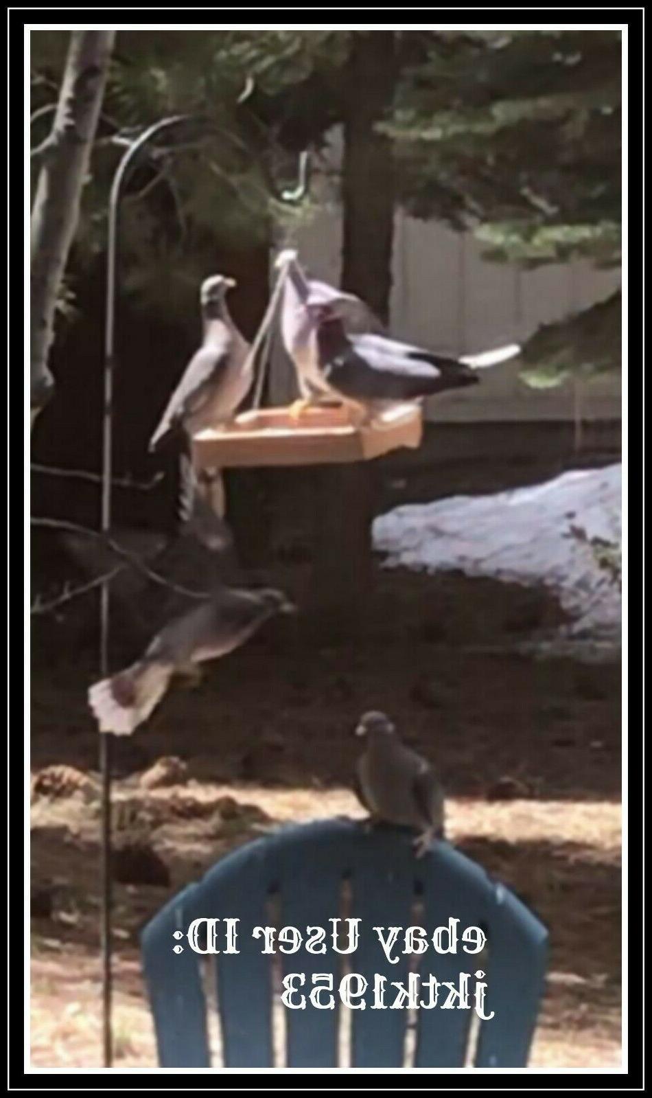 Gardirect Bird Feeder Bird