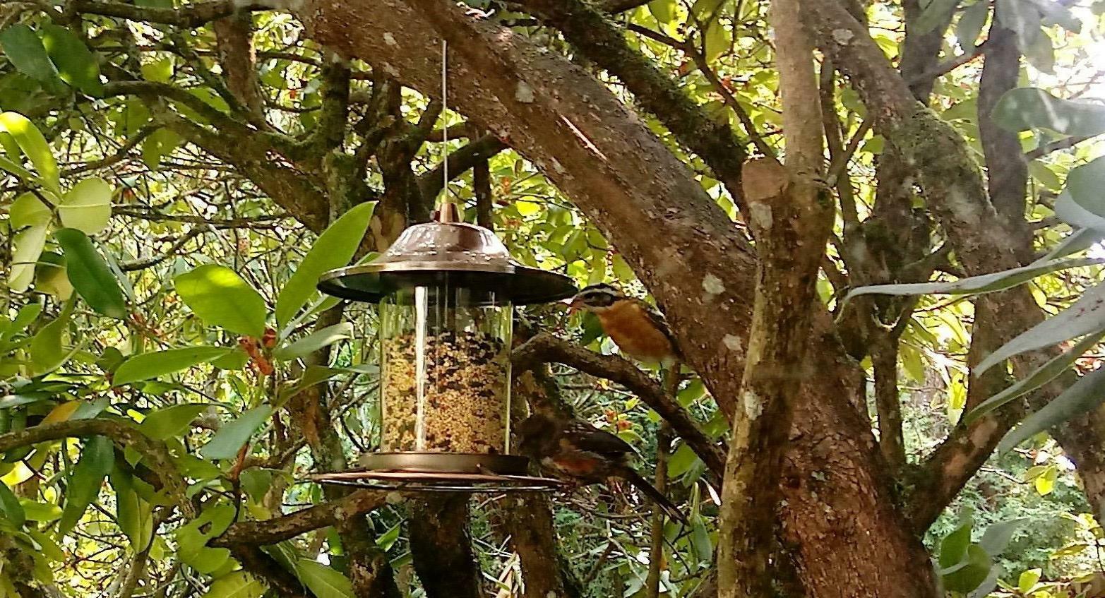 Wild Bird Feeder Hangingn Outdoor Seed Food Animal
