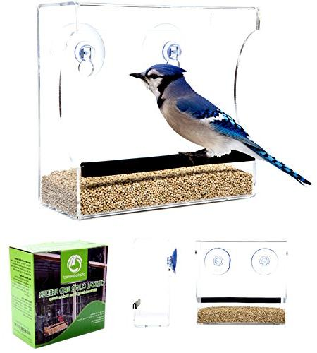 CRYSTAL CLEAR BIRD Birds, Cats Love - to Clean Fill - See and Orioles Inches From Kitchen -