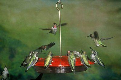 hummzinger excel hummingbird feeder