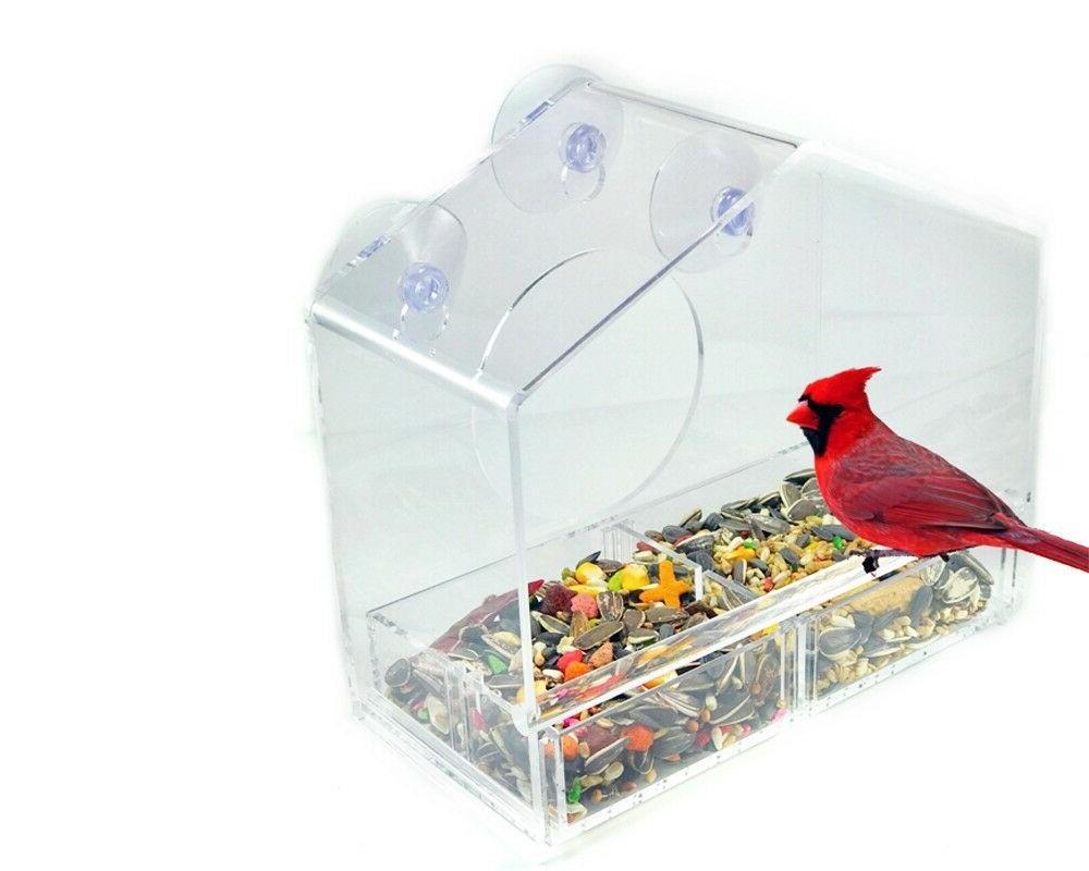 *New* Window Bird With 3