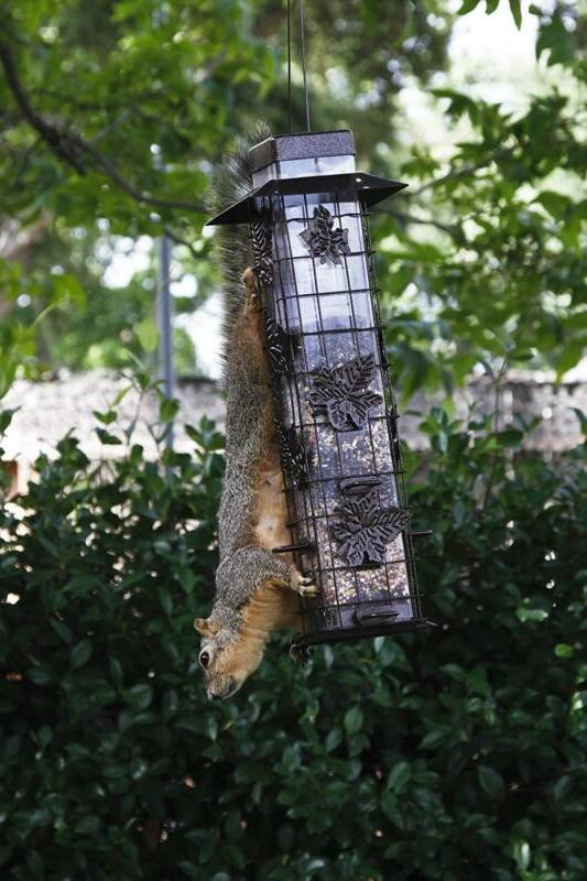 Perky-Pet 336 Squirrel-Be-Gone Bird Feeder lb