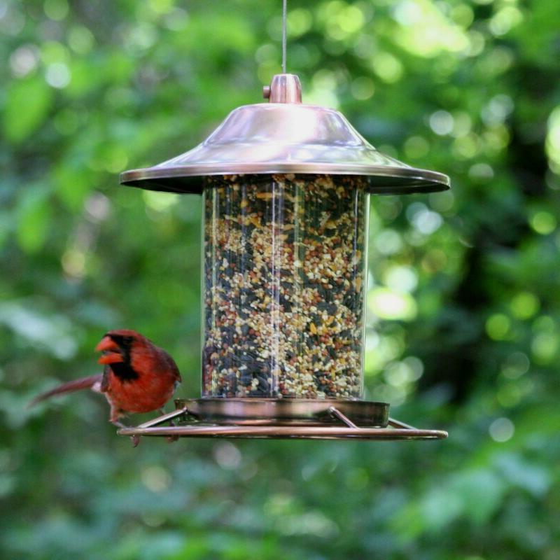 Perky Pet Copper Bird Feeder Circular Dispenser Transparent