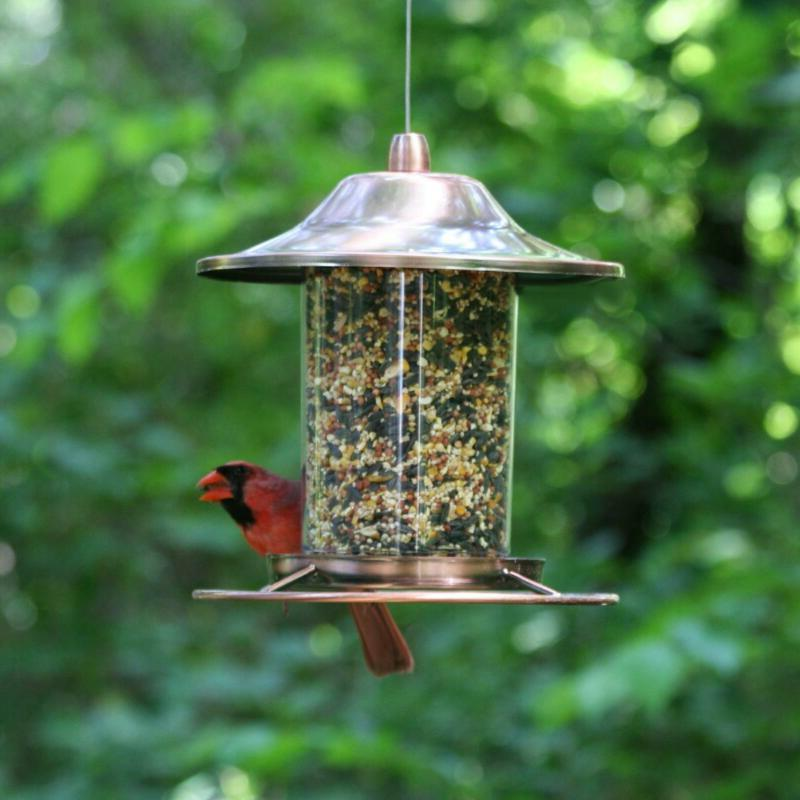 Perky Pet Copper Panorama Bird Dispenser Transparent