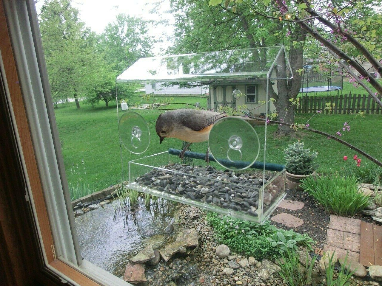 Removable Clear Window Bird