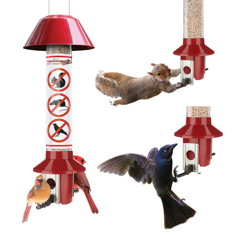 roamwild red squirrel proof cardinal bird feeder