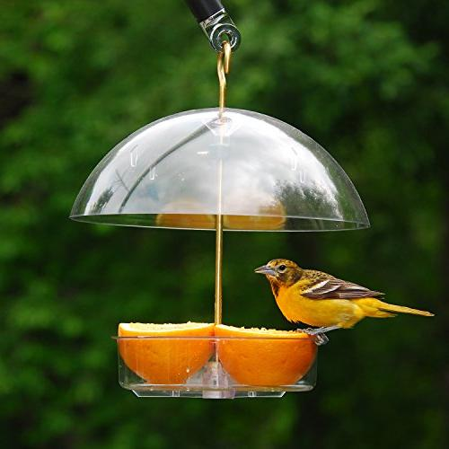 Droll Yankees All Birds Plus Feeder