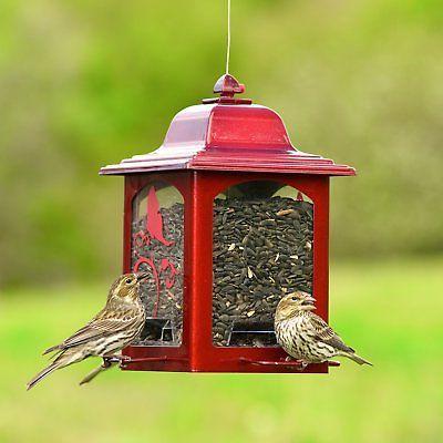 Perky Sparkle Wild Bird