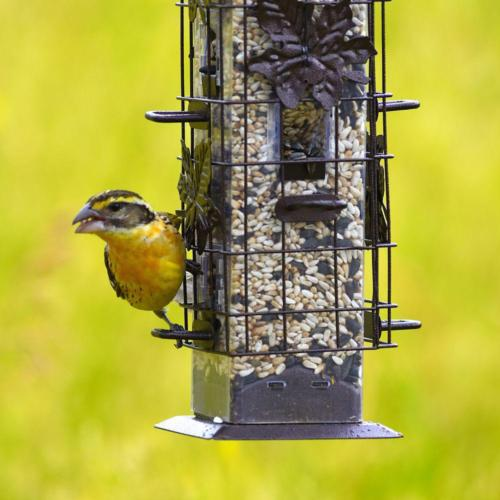 Squirrel Proof Bird Seed Tower Yard