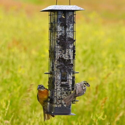 Bird Feeder Capacity Feeding