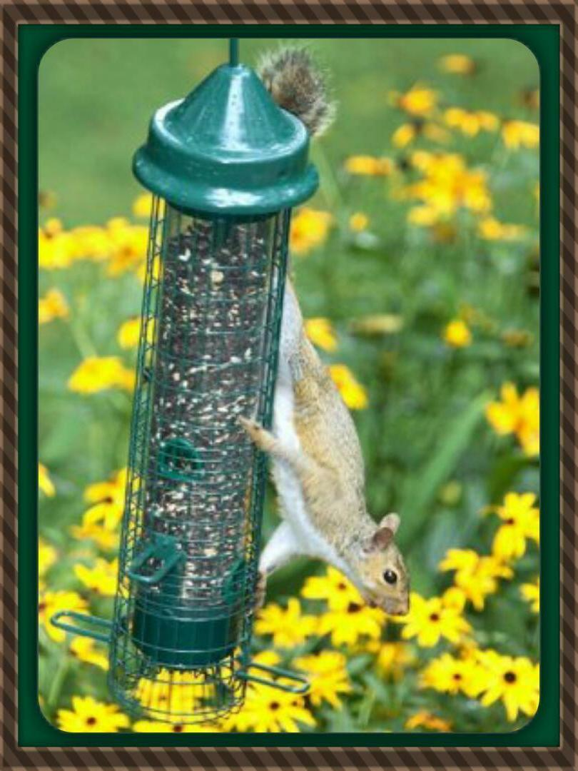 BROME SQUIRREL BUSTER SQUIRREL 1015 HOLDS QUARTS