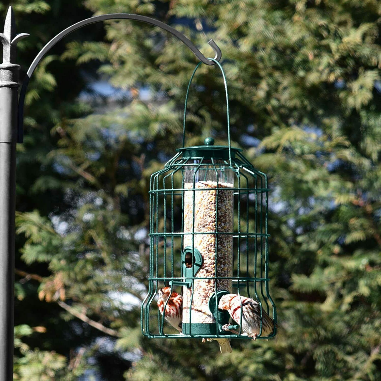Squirrel Proof Bird Hanging Seed Outdoor Yard