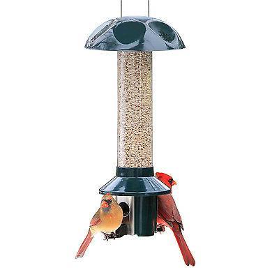 Squirrel Proof PestOff Birds -