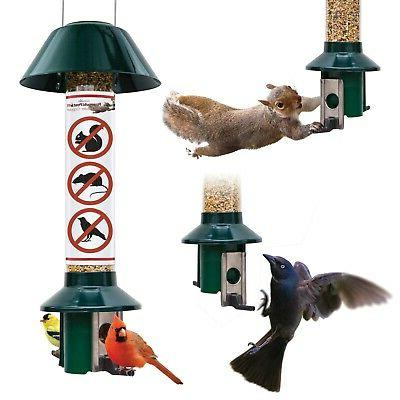 squirrel proof bird feeders pestoff
