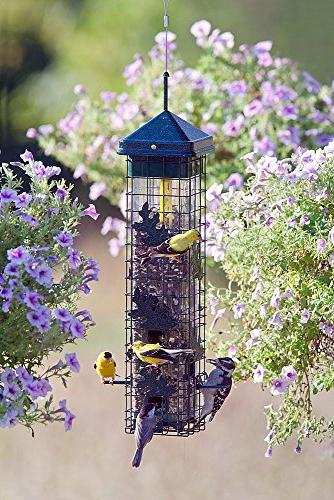 Squirrel Bird Feeder with Feeding Ports, Seed Capacity, Seed