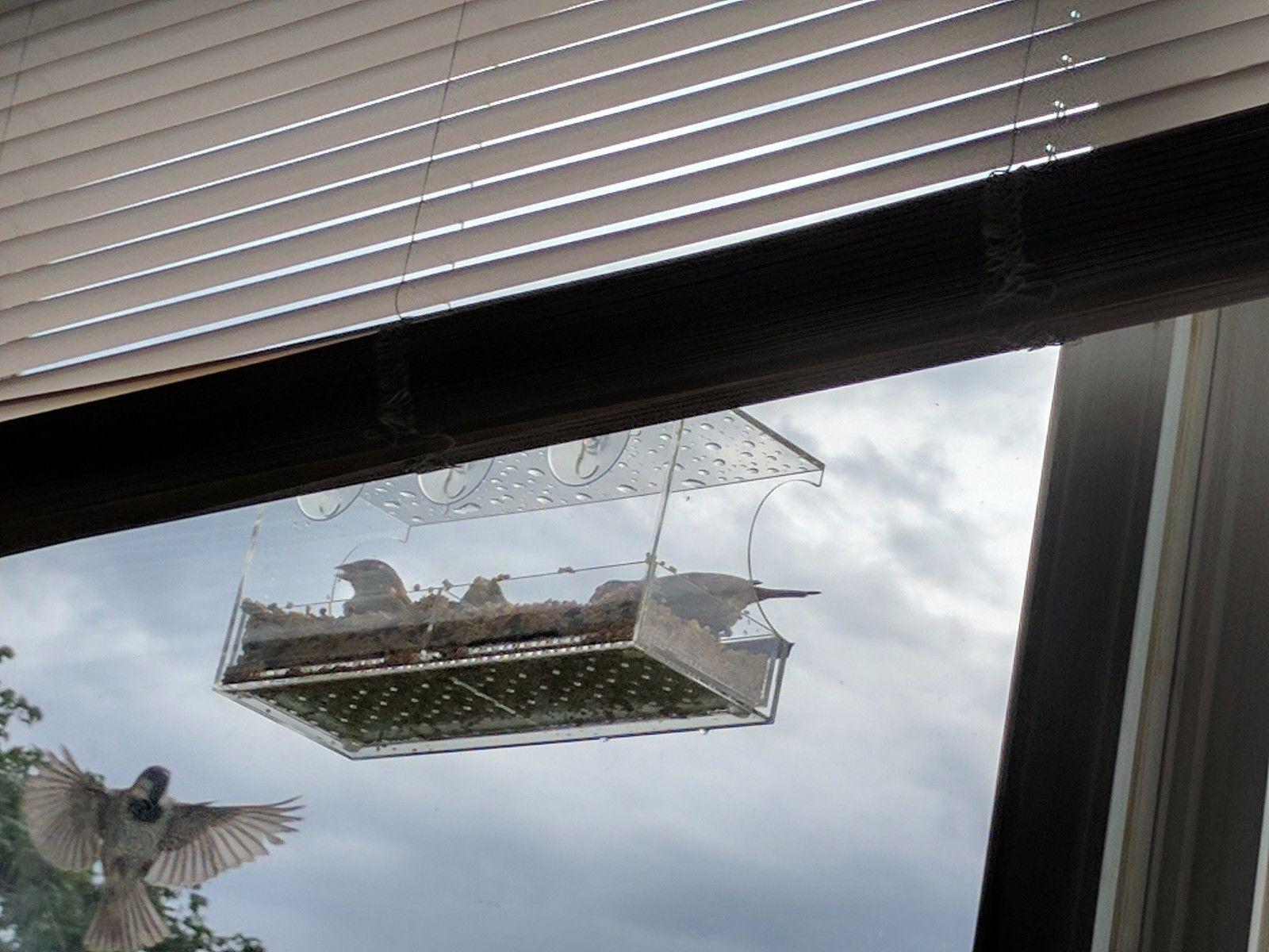 THE Window Bird Feeder: large, FAST