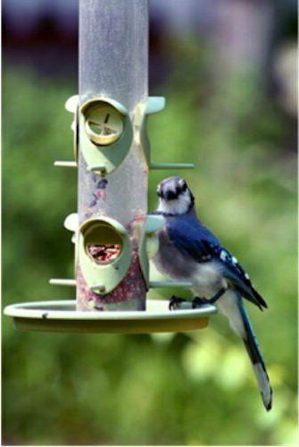 Wagner's Bird Food,