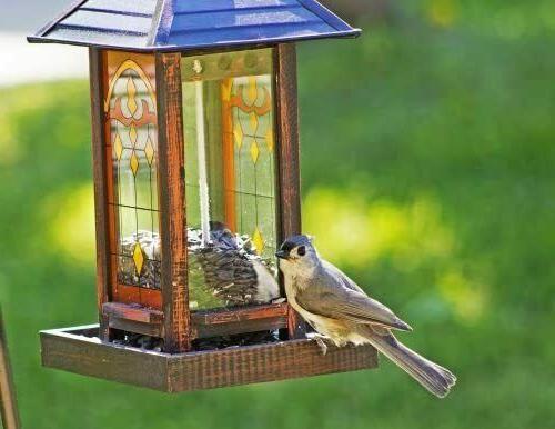 Wagner's Sunflower Seed Wild Bird
