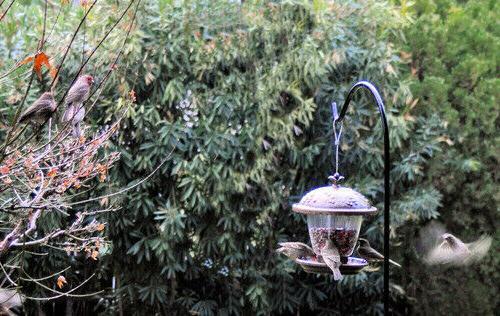 Wild Bird Feeders Squirrel Hanging Seed Food