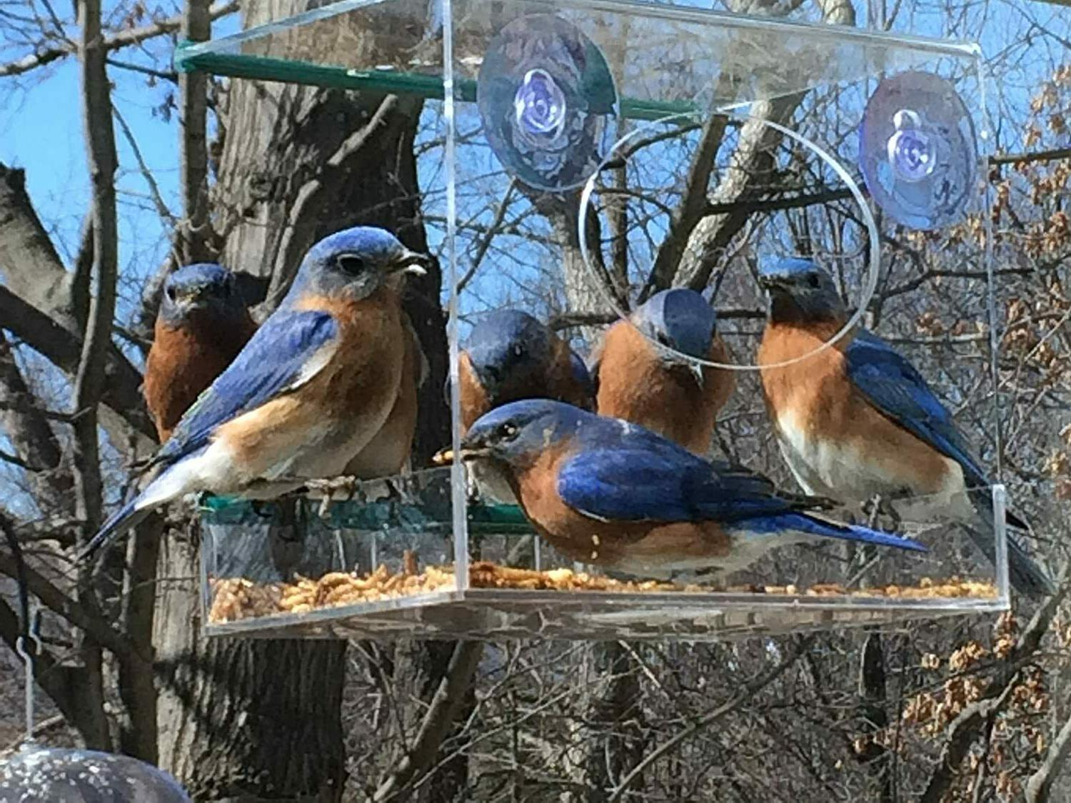 Window Bird Feeder Outside with Cups & Removable