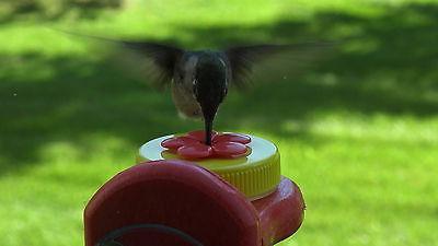 Nectar Feeder Yellow WD-1,