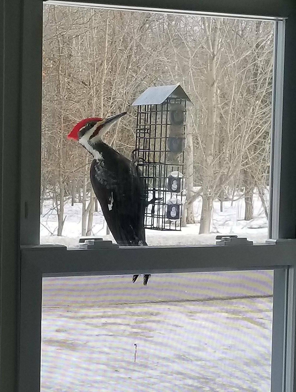 window mount double suet cake bird feeder
