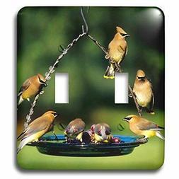 3dRose lsp_250853_2 Cedar Waxwings on grape jelly birdfeeder