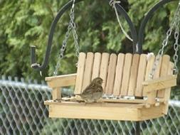 Poplar Porch Swing Bird Feeder - Free US Shipping