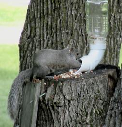 Squirrel Feeder Kit