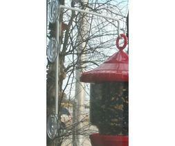 Songbird Essentials Window Suction Cup Hanger